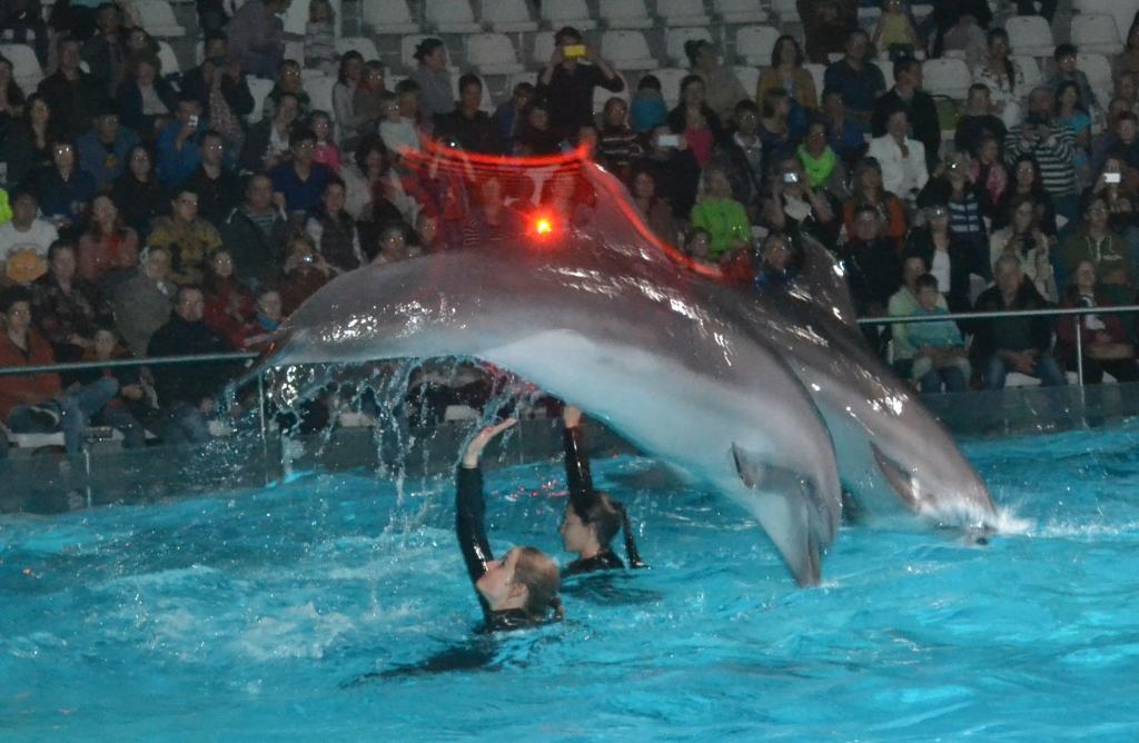 delfín 10
