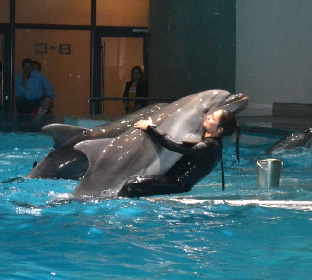 delfín 11