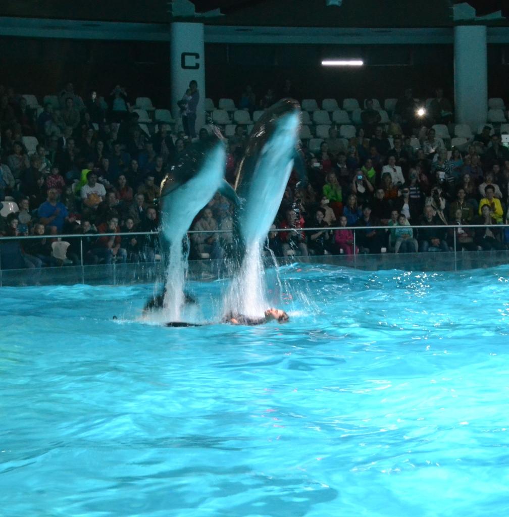 delfín 7
