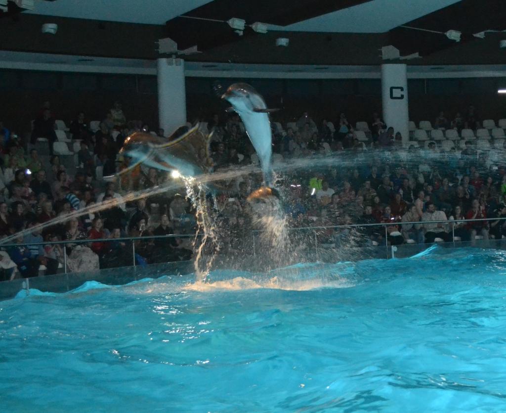 delfín 9
